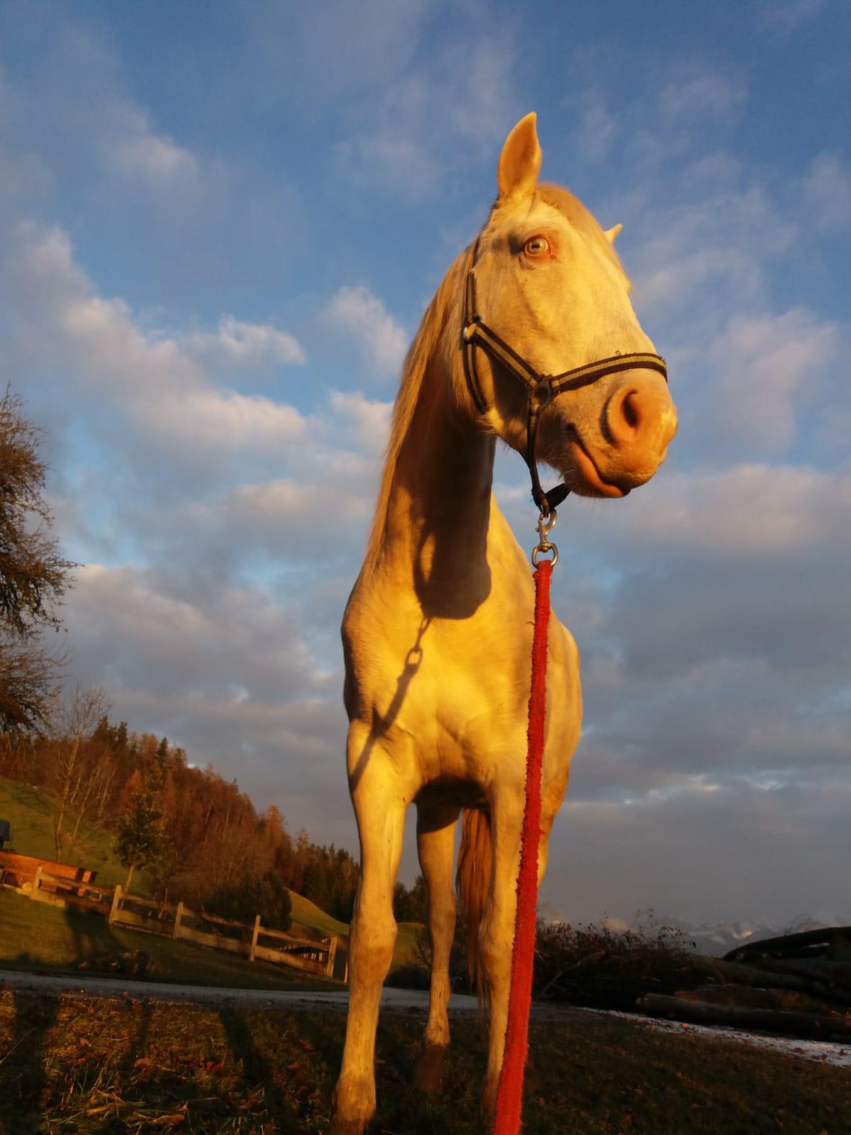 Pferd im Sonenuntergangslicht