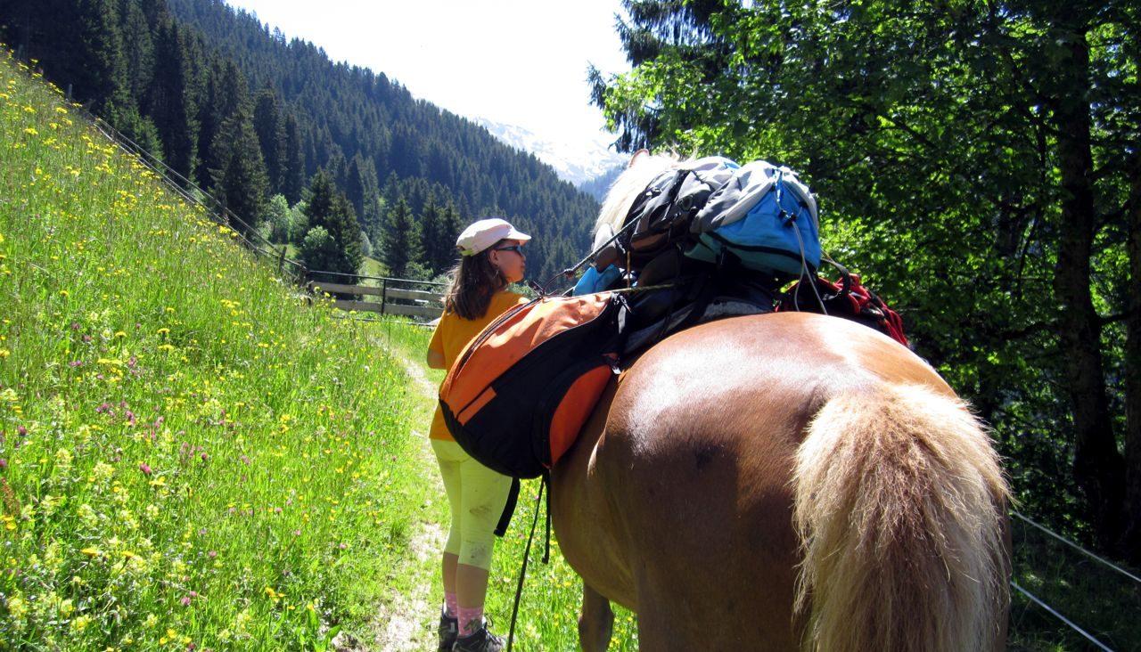 wanderreiten Schauer, Pferd mit Gepäck