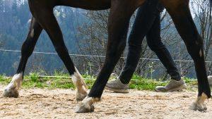 Training mit jungen Pferden