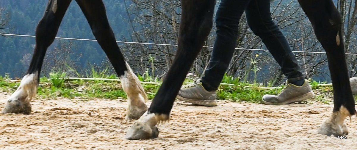 Pferdebeine, Trainerinbeine